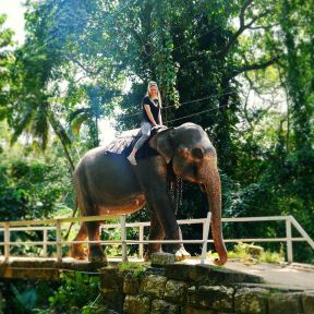 A_warm_welcome_to_Sri_Lanka_from_my_new_pet__a_38-year-old_elephant_named_Pebula__found_near_the_hill_town_of_Kandy